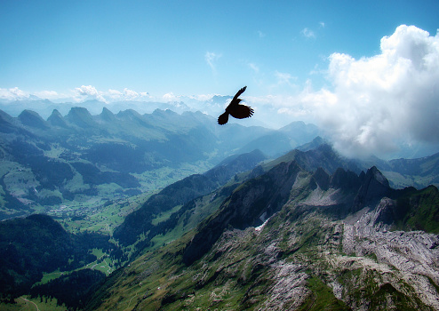 Switzerland「Bird of prey flying above Santis mountain, Schwende, Switzerland」:スマホ壁紙(8)