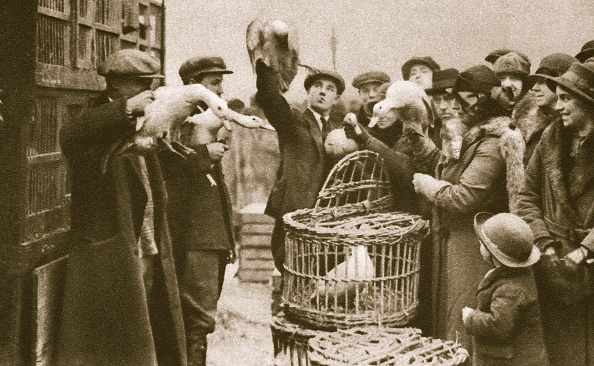 Livestock「Buying Live Poultry At A 'Pedlars' Market' At The Caledonian Market London 20th Century」:写真・画像(10)[壁紙.com]