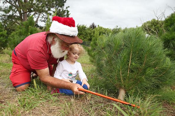 Brendon Thorne「Sydneysiders Head To Sydney Christmas Tree Farm」:写真・画像(2)[壁紙.com]