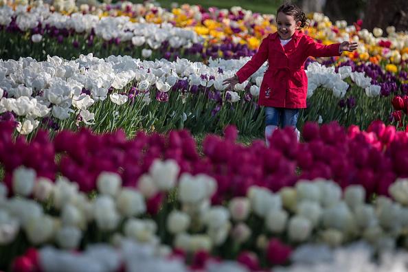 チューリップ「Istanbul Comes Alive With Colour During Its Annual Spring Tulip Festival」:写真・画像(9)[壁紙.com]