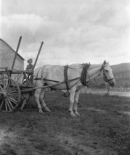Social History「Girl In Cart Harnessed To Horse」:写真・画像(9)[壁紙.com]