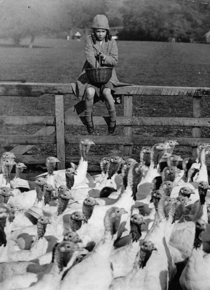 Hen「Young girl feeding  the turkey hens. Photograph. Around 1930.  (Photo by Austrian Archives (S)」:写真・画像(0)[壁紙.com]