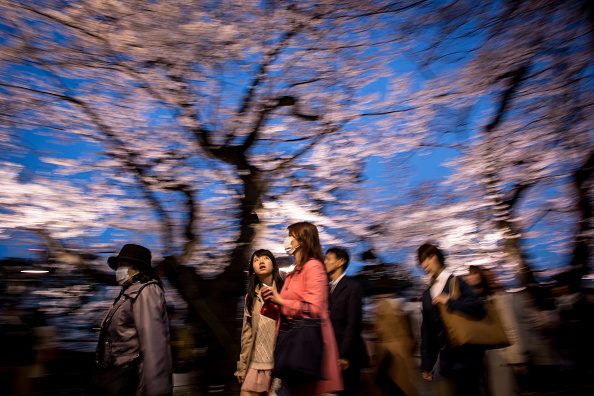 Cherry Blossom「People Enjoy Cherry Blossom In Japan」:写真・画像(17)[壁紙.com]