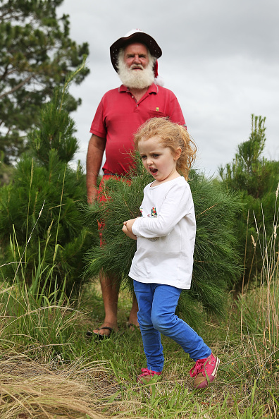 Land「Sydneysiders Head To Sydney Christmas Tree Farm」:写真・画像(17)[壁紙.com]