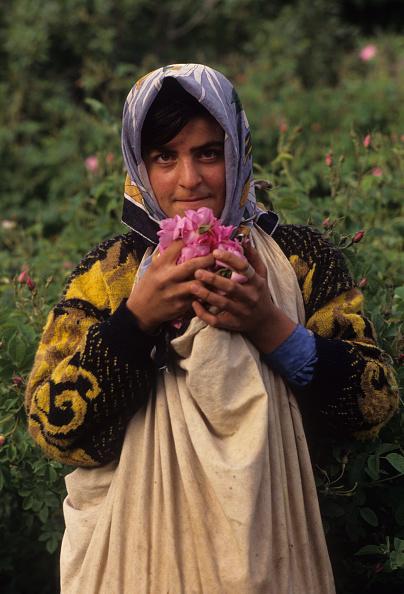 薔薇「Golabgiri In Qamsar」:写真・画像(0)[壁紙.com]
