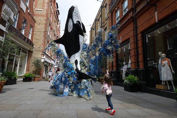 Killer Whale「Local Businesses Support The Chelsea Flower Show」:写真・画像(1)[壁紙.com]