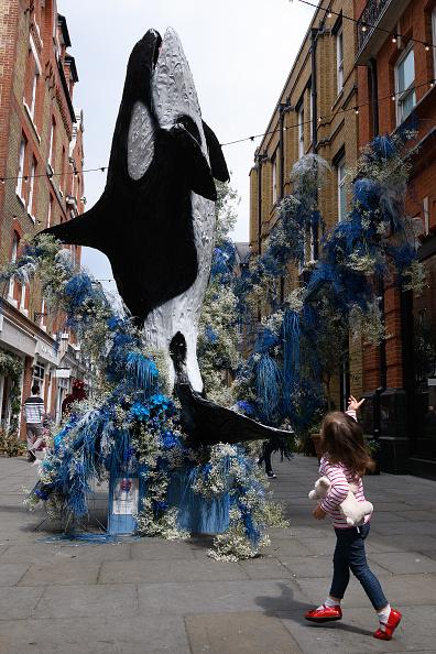 Killer Whale「Local Businesses Support The Chelsea Flower Show」:写真・画像(0)[壁紙.com]
