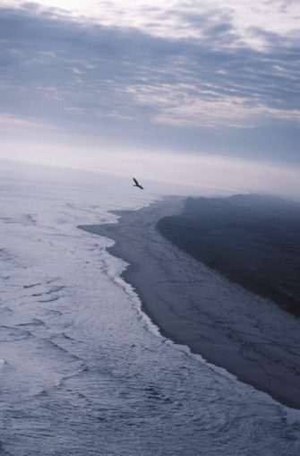 ビーチ「Bird flying over beach, Madeleine Islands, Quebec, Canada」:スマホ壁紙(12)
