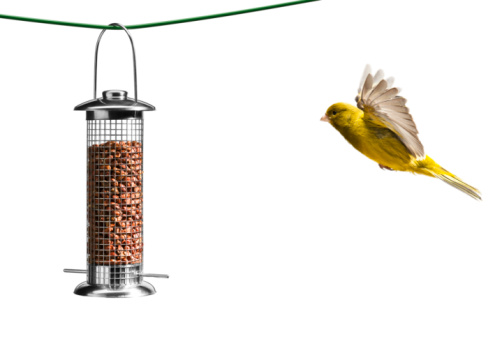 Animal Wing「Bird flying towards bird feeder, white background」:スマホ壁紙(15)