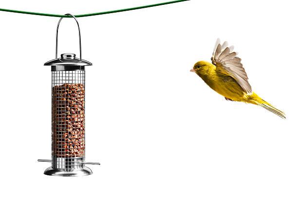 Bird flying towards bird feeder, white background:スマホ壁紙(壁紙.com)