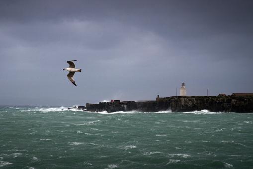 波「Bird flying near lighthouse, Isla de las Palomas, Tarifa, Cadiz, Andalucia, Spain」:スマホ壁紙(6)