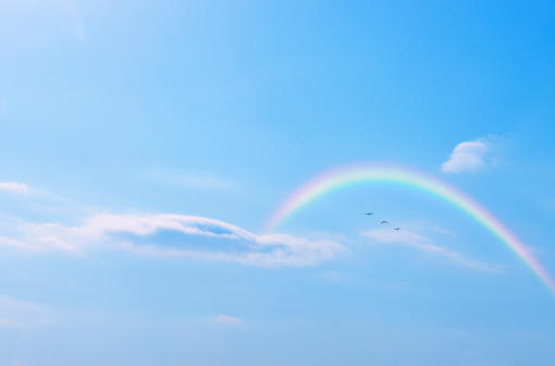 Rainbow「Bird flying in the sky and rainbow, Tokyo Prefecture, Honshu, Japan」:スマホ壁紙(4)