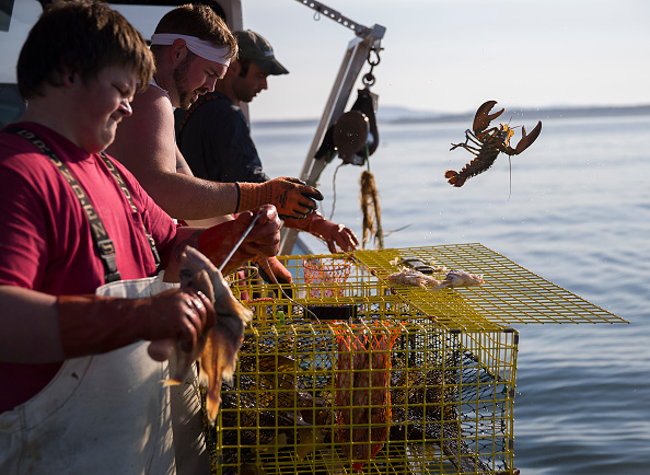 Throwing「Maine's Lobster Industry Benefits From Rising Ocean Temperatures」:写真・画像(16)[壁紙.com]
