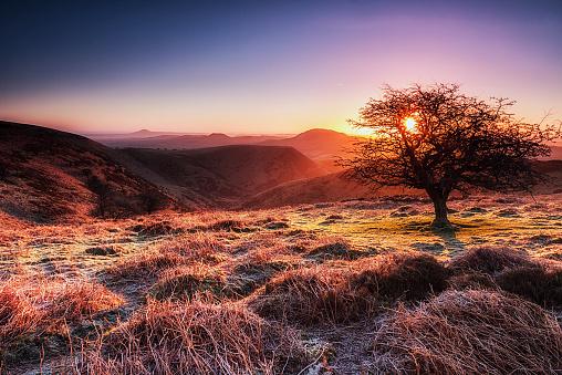 Single Tree「UK, England, Shropshire, Long Mynd at sunrise」:スマホ壁紙(6)