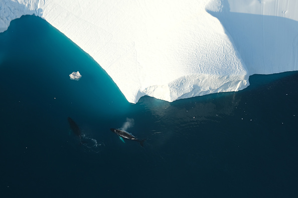 Environmental Issues「Western Greenland Hit By Unseasonably Warm Weather」:写真・画像(2)[壁紙.com]