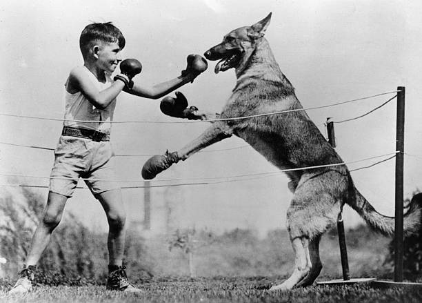 Boxing With Dog:ニュース(壁紙.com)