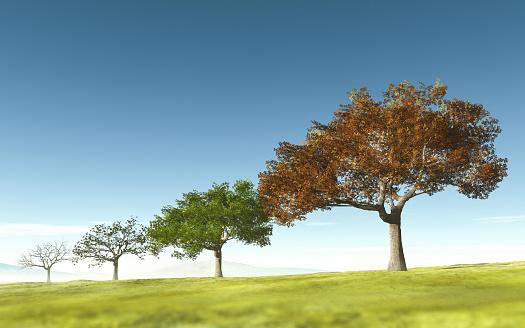 Continuity「Trees through four seasons」:スマホ壁紙(18)