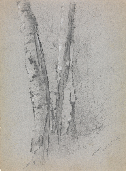 Plant Bark「Study Of Birch Trunks (Scribners),」:写真・画像(0)[壁紙.com]