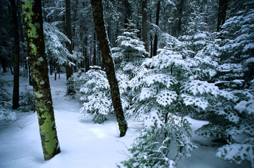 Snowdrift「Snowy forest」:スマホ壁紙(18)