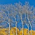 West Elk Mountains壁紙の画像(壁紙.com)