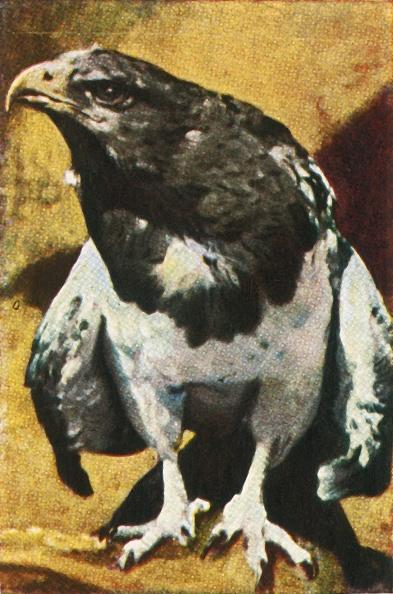 Beak「Adult Aguja」:写真・画像(18)[壁紙.com]