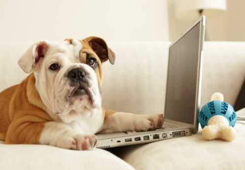 Curiosity「Bulldog Puppy Sitting On Couch, Paw On Laptop」:スマホ壁紙(8)