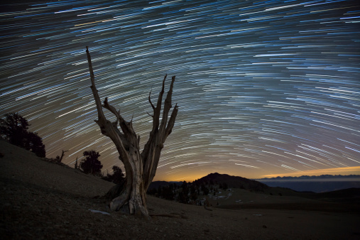 Inyo National Forest「A dead bristlecone pine tree against a backdrop of star trails in the White Mountains, California.」:スマホ壁紙(13)