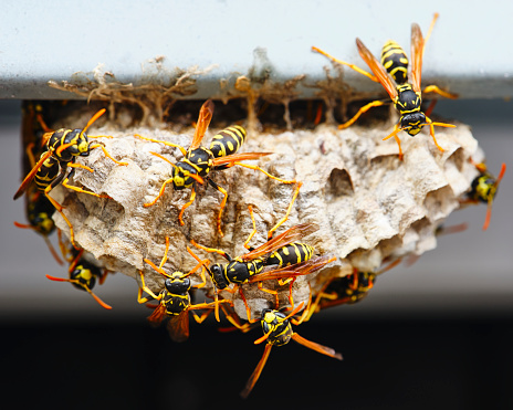 Uncultivated「Wasp Nest Macro」:スマホ壁紙(0)