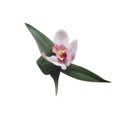 Flower Stigma「Cymbidium Orchid」:スマホ壁紙(14)