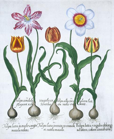 Petal「Five Tulips 1613」:写真・画像(9)[壁紙.com]