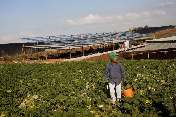 Middle East「Israeli Farmers Use Barn Roofs To Generate Electricity」:写真・画像(6)[壁紙.com]