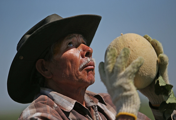 Agriculture「California Central Valley Farming Communities Struggle With Drought」:写真・画像(16)[壁紙.com]