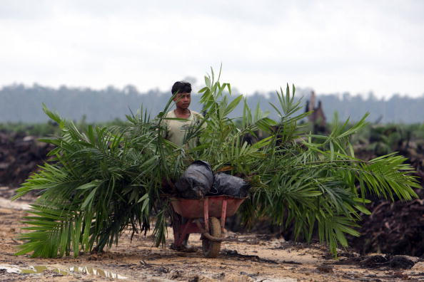 Tropical Rainforest「Deforestation Continues In Sumatra」:写真・画像(14)[壁紙.com]