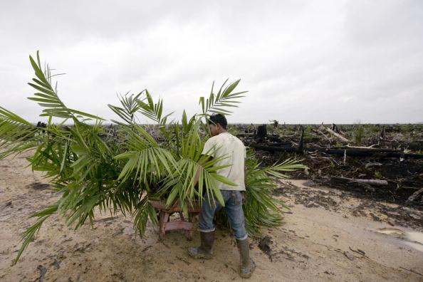 Seasoning「Deforestation Continues In Sumatra」:写真・画像(3)[壁紙.com]