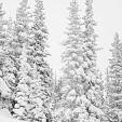 サンイサベル国定森林壁紙の画像(壁紙.com)