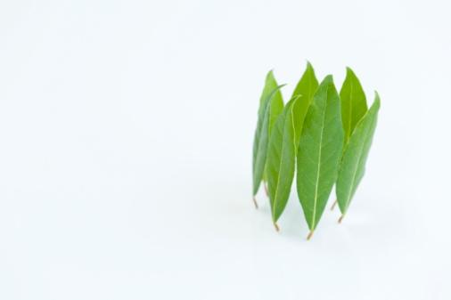 Bay Leaf「Bay leaves forming a circle」:スマホ壁紙(11)