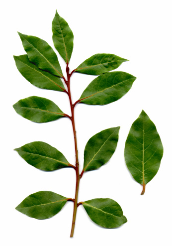 Bay Leaf「bay leaves, Laurus nobilis」:スマホ壁紙(7)