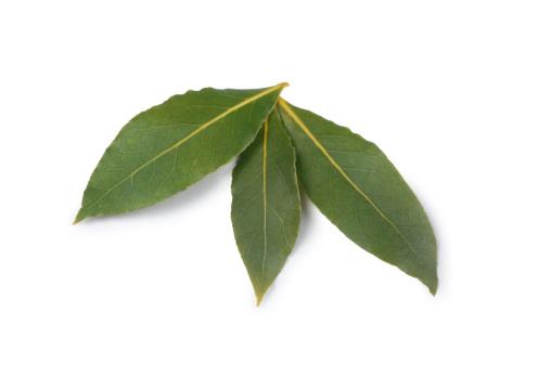 Bay Leaf「Bay Leaves」:スマホ壁紙(14)