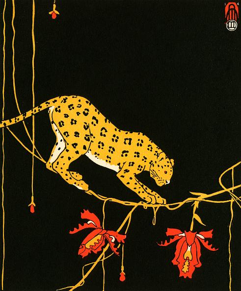 Black Background「Leopard By Maxwell Armfield」:写真・画像(12)[壁紙.com]