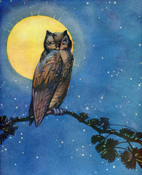 星空「Winking Owl With Full Moon」:写真・画像(2)[壁紙.com]