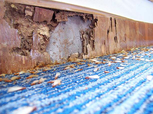 Illustration of damages caused by pests:スマホ壁紙(壁紙.com)