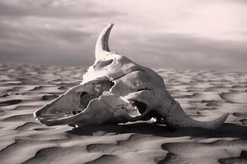 Animal Skeleton「Skull in desert」:スマホ壁紙(3)