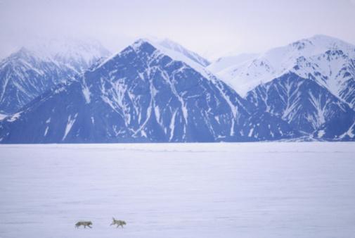Sled「Sled dogs, Baffin Island, Canada, elevated view」:スマホ壁紙(8)