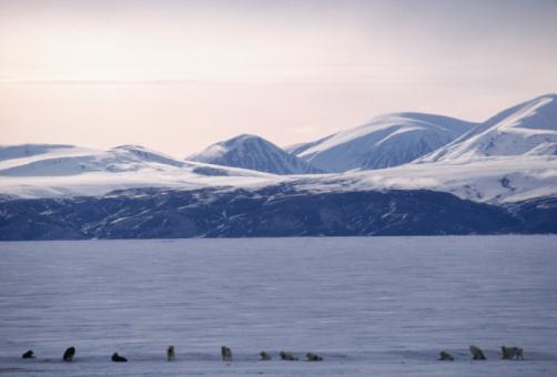 Sled「Sled dogs, Baffin Island, Canada」:スマホ壁紙(7)