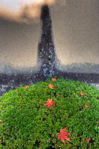 秋+京都「Fallen maple (acer) leaves on a green bush」:スマホ壁紙(4)
