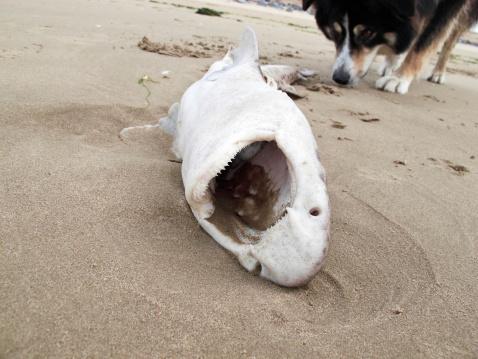 質感「Dead dogfish washed up on beach」:スマホ壁紙(17)