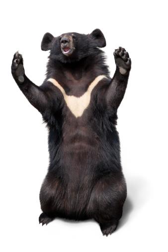Bear「Chinese bile bear」:スマホ壁紙(7)