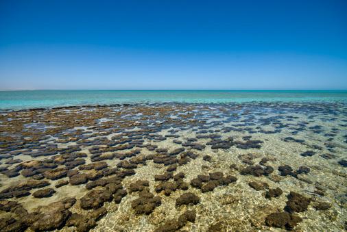 Shallow「A colorful portrait of Stromatolites at Shark Bay」:スマホ壁紙(8)