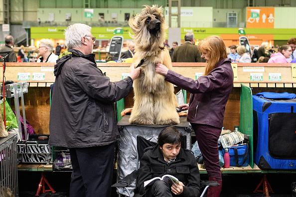 ベストオブ「2018 Crufts Dog Show Day Two」:写真・画像(14)[壁紙.com]