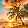 アンティル諸島壁紙の画像(壁紙.com)